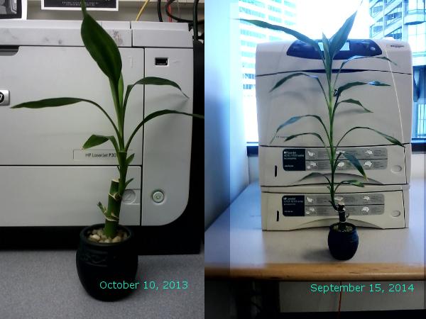 Bamboo 1 year