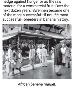 Banana market